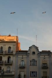 Las cigüeñas sobrevuelan cada tarde la plaza Vila de Foix de Lleida