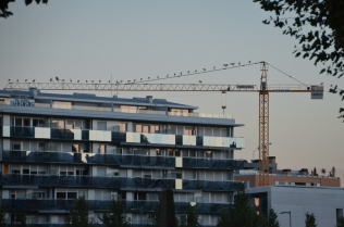Vista de una grúa de la construcción llena de cigüeñas, en Cappont