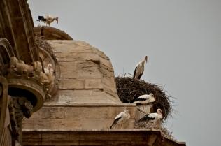 Nidos en el tejado de las torres de la catedral de Lleida