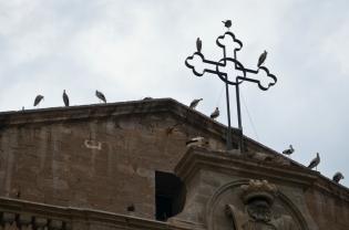 Cigüeñas en la catedral de Lleida al atardecer