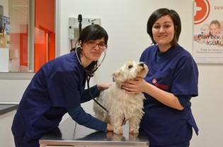 Paula Arrieta y Ariadna Garcia ofrecerán asistencia básica veterinaria a las mascotas de personas sin recursos de Lleida Cecília López