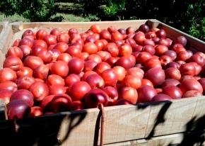 Fruta acabada de recoger. Imagen cedida.